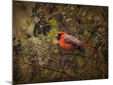 Song of the Red Bird 2-Jai Johnson-Mounted Giclee Print
