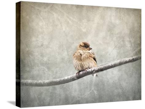 Sparrow Braving the Cold-Jai Johnson-Stretched Canvas Print
