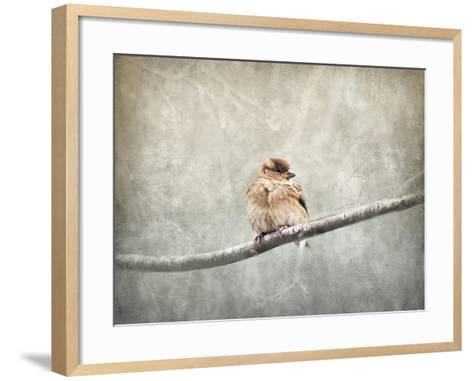 Sparrow Braving the Cold-Jai Johnson-Framed Art Print