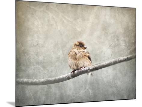 Sparrow Braving the Cold-Jai Johnson-Mounted Giclee Print