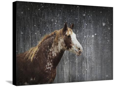 Winters Arrival Horse-Jai Johnson-Stretched Canvas Print