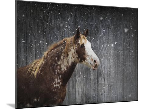 Winters Arrival Horse-Jai Johnson-Mounted Giclee Print