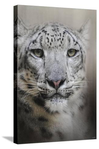Stare of the Snow Leopard-Jai Johnson-Stretched Canvas Print