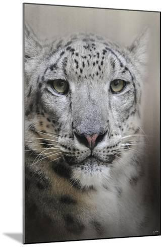 Stare of the Snow Leopard-Jai Johnson-Mounted Giclee Print
