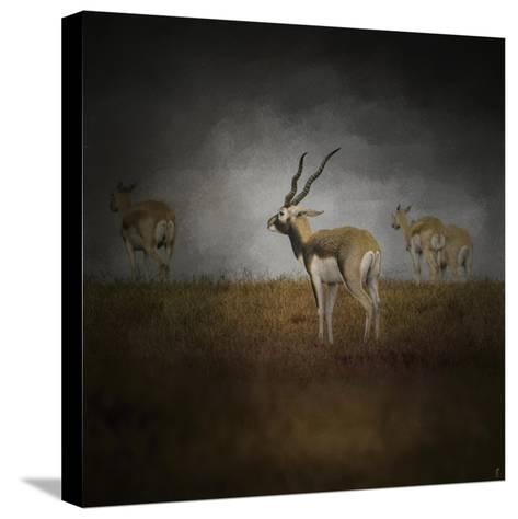 Storm Spotters-Jai Johnson-Stretched Canvas Print