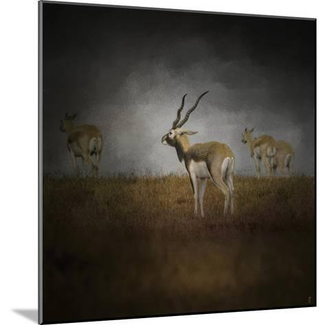 Storm Spotters-Jai Johnson-Mounted Giclee Print