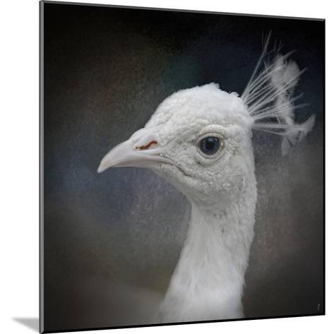 Peacock 9-Jai Johnson-Mounted Giclee Print