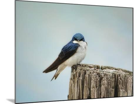 Perched and Waiting-Jai Johnson-Mounted Giclee Print