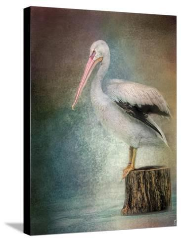 Perched Pelican-Jai Johnson-Stretched Canvas Print