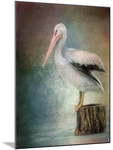 Perched Pelican-Jai Johnson-Mounted Giclee Print