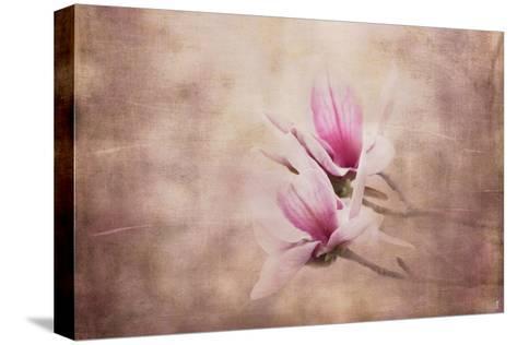 Pink Magnolia 3-Jai Johnson-Stretched Canvas Print