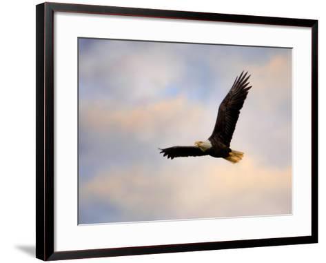 Pinson Mounds Eagle 1-Jai Johnson-Framed Art Print