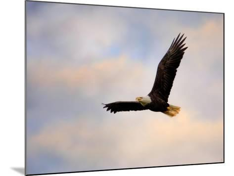 Pinson Mounds Eagle 1-Jai Johnson-Mounted Giclee Print