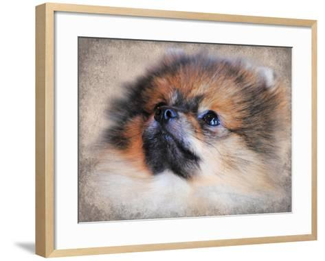 Pomeranian Portrait-Jai Johnson-Framed Art Print