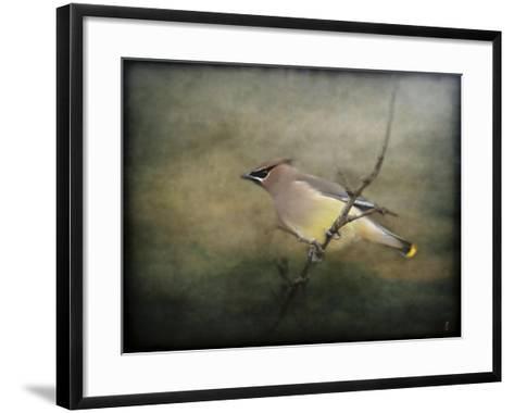 Portrait of a Cedar Waxwing-Jai Johnson-Framed Art Print
