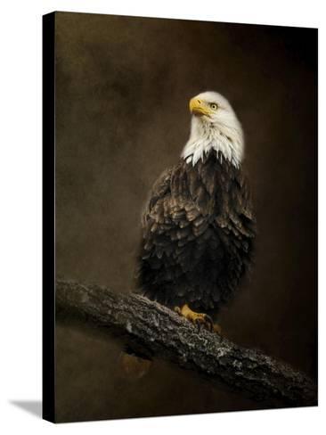 Portrait of an Eagle-Jai Johnson-Stretched Canvas Print