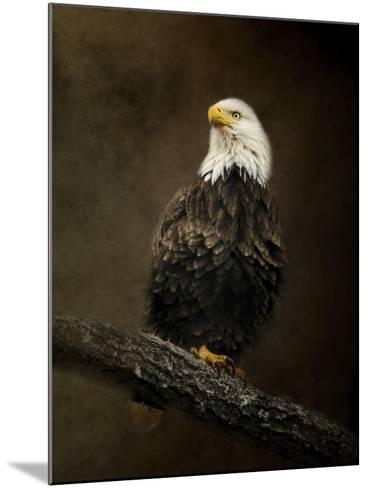 Portrait of an Eagle-Jai Johnson-Mounted Giclee Print