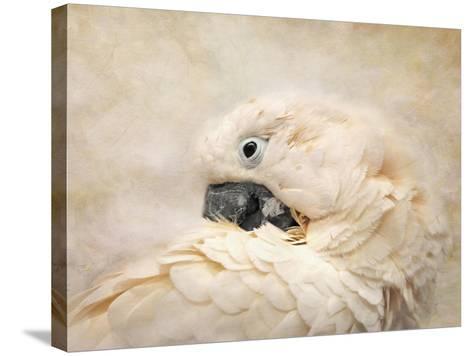 Preening Umbrella Cockatoo-Jai Johnson-Stretched Canvas Print