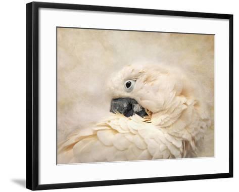 Preening Umbrella Cockatoo-Jai Johnson-Framed Art Print