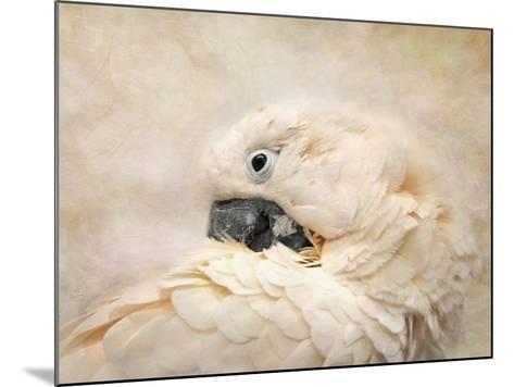 Preening Umbrella Cockatoo-Jai Johnson-Mounted Giclee Print