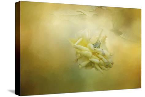 The Last Yellow Rose-Jai Johnson-Stretched Canvas Print