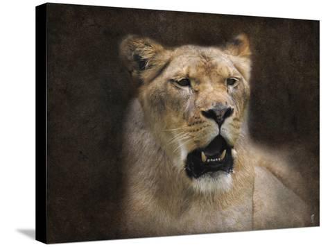 The Lioness Portrait-Jai Johnson-Stretched Canvas Print
