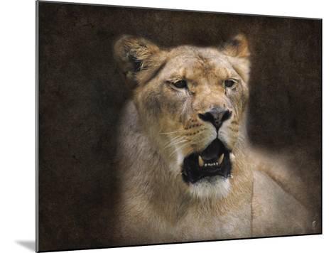 The Lioness Portrait-Jai Johnson-Mounted Giclee Print