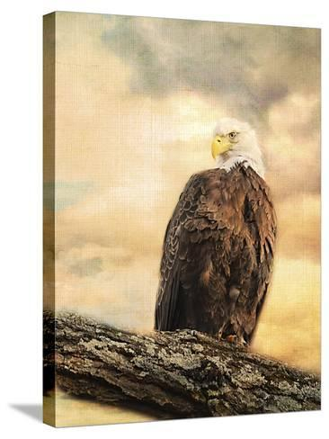 The Queen at Rest Bald Eagle-Jai Johnson-Stretched Canvas Print