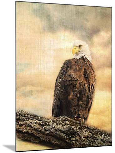 The Queen at Rest Bald Eagle-Jai Johnson-Mounted Giclee Print