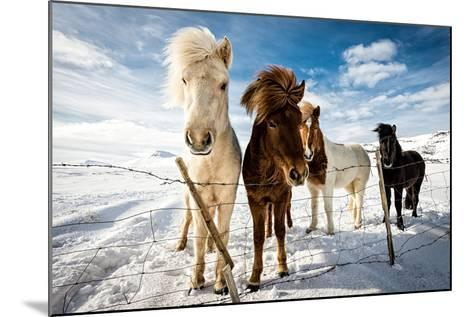 Icelandic Hair Style-Mike Leske-Mounted Photographic Print