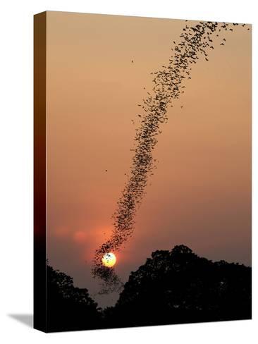 Bat Swarm at Sunset-Jean De-Stretched Canvas Print