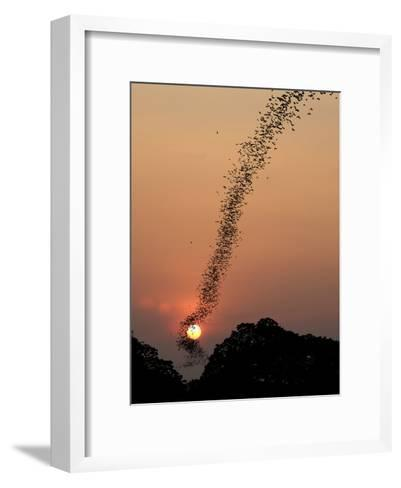 Bat Swarm at Sunset-Jean De-Framed Art Print