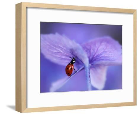 Ladybird on Purple Hydrangea-Ellen Van-Framed Art Print
