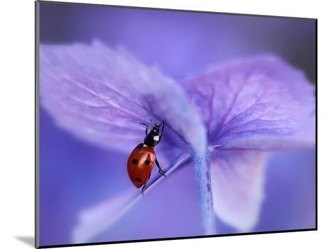Ladybird on Purple Hydrangea-Ellen Van-Mounted Photographic Print