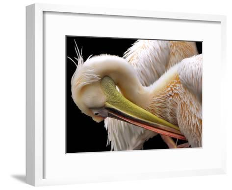 Toileting...-Thierry Dufour-Framed Art Print
