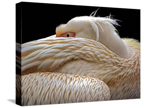 To Be Half Asleep...-Thierry Dufour-Stretched Canvas Print