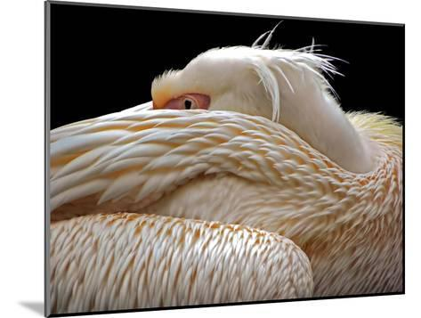To Be Half Asleep...-Thierry Dufour-Mounted Photographic Print