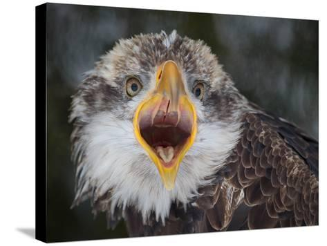 Intensity !!!-Alfred Forns-Stretched Canvas Print