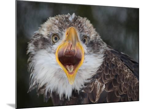 Intensity !!!-Alfred Forns-Mounted Photographic Print