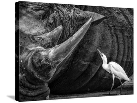 Personal Advisor-Giovanni Casini-Stretched Canvas Print