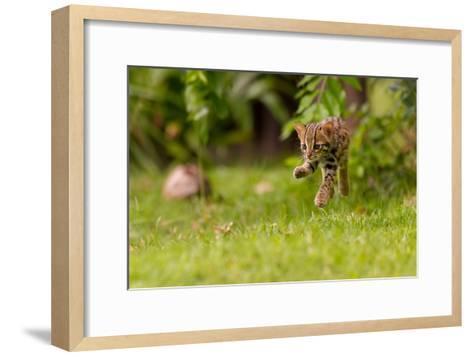 Levitating Leopard Cat-Ashley Vincent-Framed Art Print
