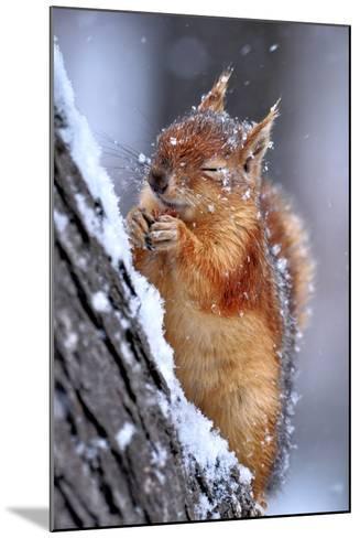 Winter-Ervin Kobakci-Mounted Photographic Print