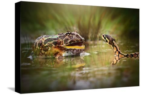 Face to Face-Shikhei Goh-Stretched Canvas Print