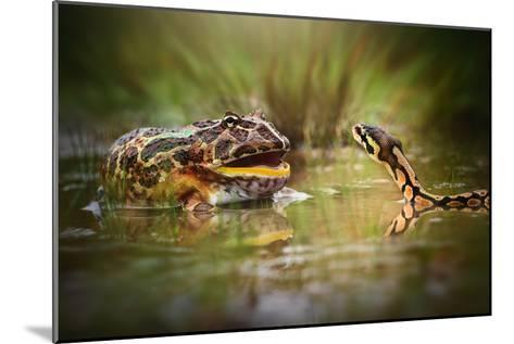 Face to Face-Shikhei Goh-Mounted Photographic Print