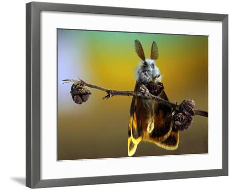 Untitled-Eyal Bussiba-Framed Art Print