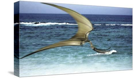 Pterodaustro Skimming the Water for Crustaceans-Stocktrek Images-Stretched Canvas Print