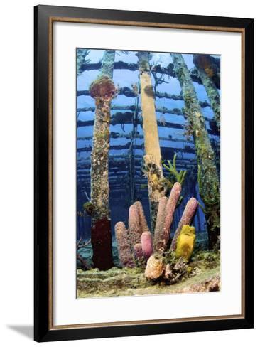 Tube Sponges on the Wreck of the Willaurie, Nassau, the Bahamas-Stocktrek Images-Framed Art Print