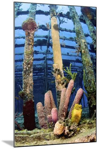 Tube Sponges on the Wreck of the Willaurie, Nassau, the Bahamas-Stocktrek Images-Mounted Photographic Print