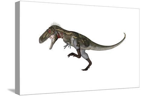 Nanotyrannus Dinosaur Roaring-Stocktrek Images-Stretched Canvas Print