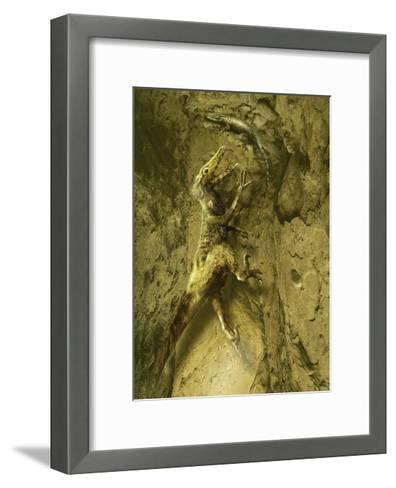 A Velociraptor Attempts to Catch a Lizard as its Next Prey-Stocktrek Images-Framed Art Print